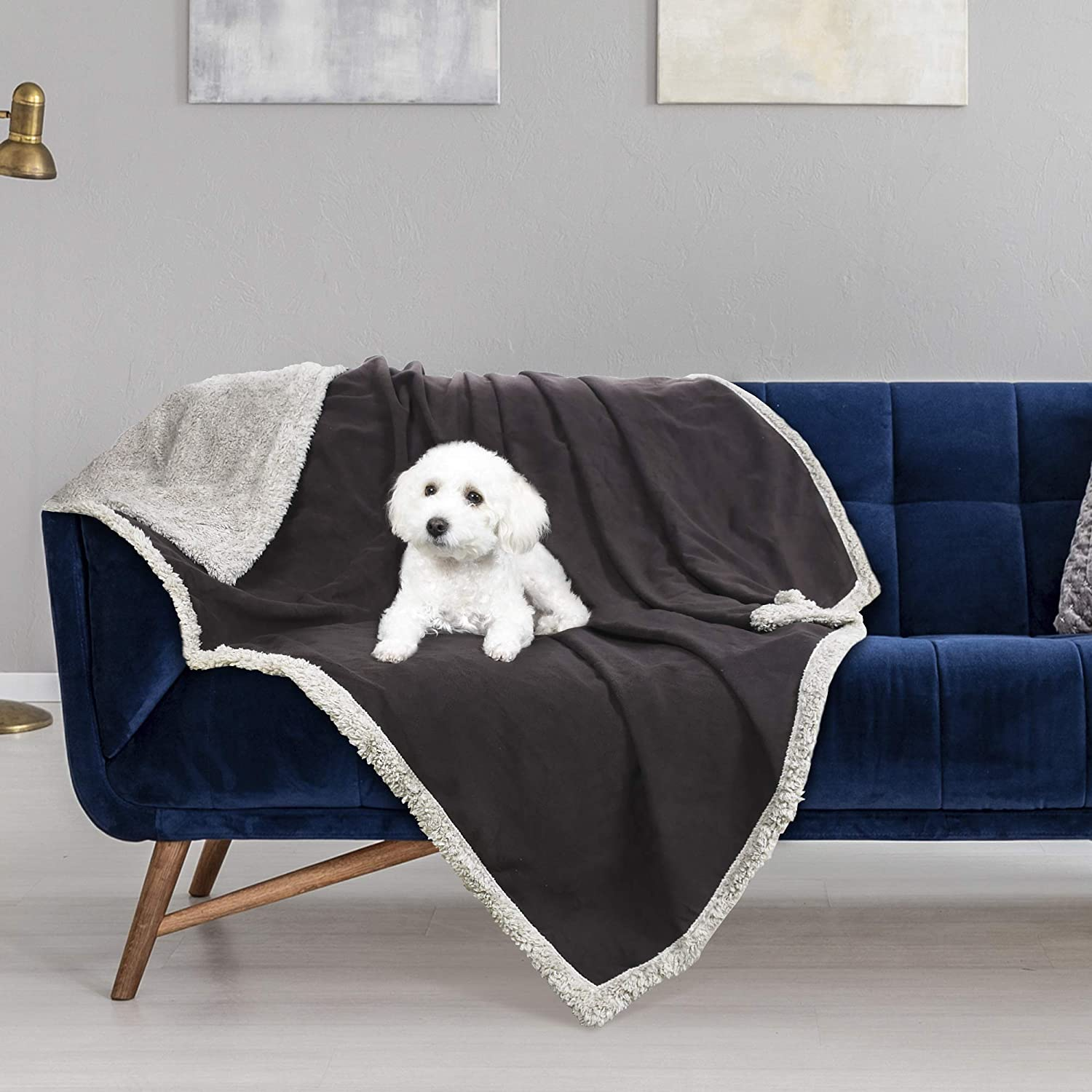 Best Pet Blanket For Couch