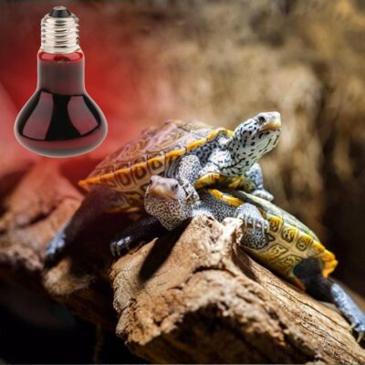 Battery Powered Heat Lamp For Reptiles
